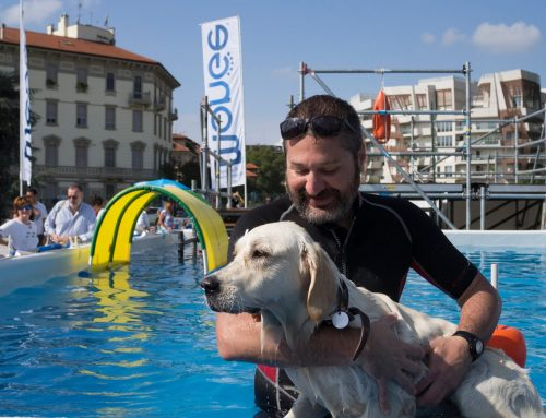 Value Fairs – Pets in the City