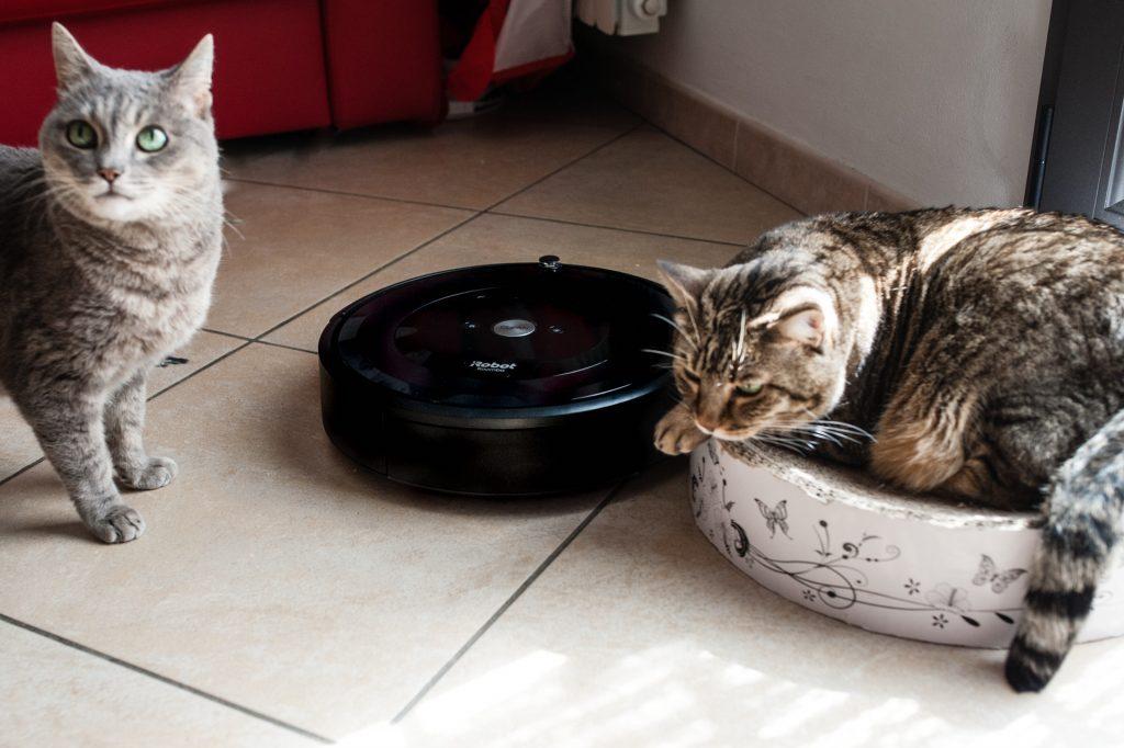 Gatti non hanno paura di Roomba, il robot aspirapolvere di iRobot